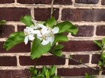 Homewood blooming 2a